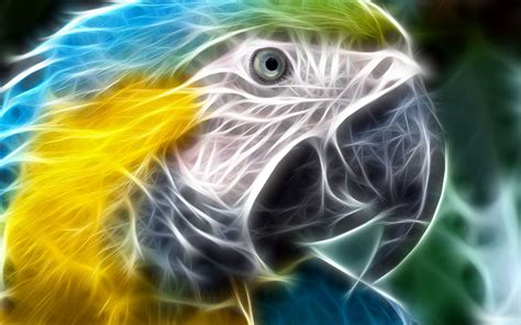 Colourful Animal Wallpaper - colorful creative animal wallpaper 3 animal wallpapers