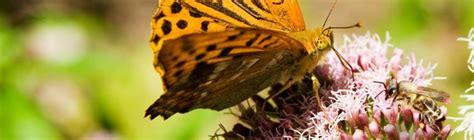 Ratgeber Bienen & Schmetterlinge Im Garten Hornbach