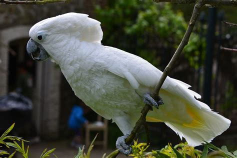 15 Birds With Spectacularly Fancy Tail Feathers