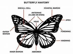 Monarch Butterfly Habitat Needs