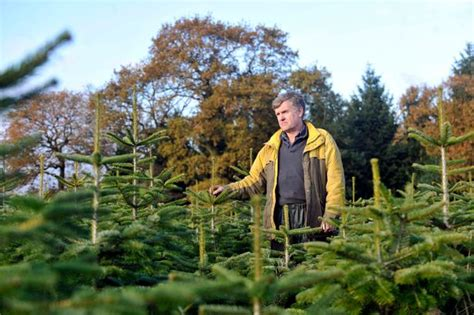 where to buy a christmas tree near solihull birmingham mail