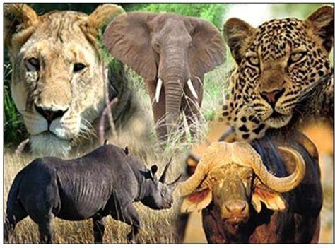 Best 5 Safaris