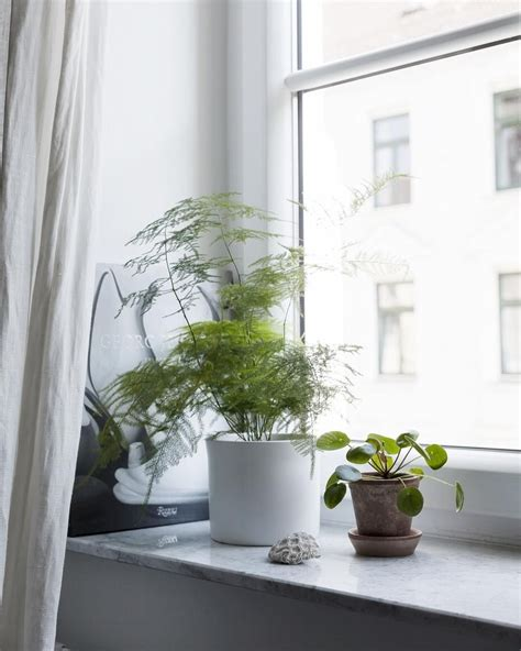 window sill things plants
