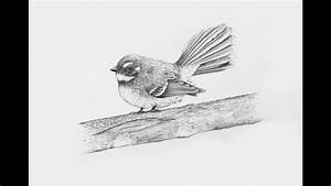How To Draw A Realistic Fantail Using Pencil - Intro