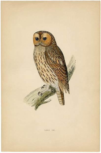 Owl Printable Owls Printables Prints Graphics Fairy