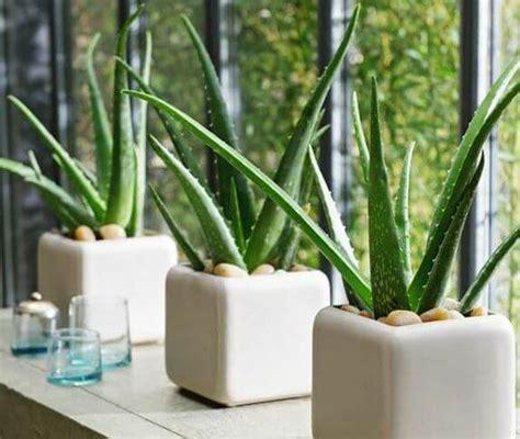 tanaman hias  tanaman hias  pot