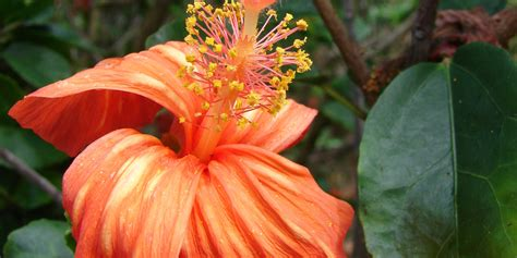 Hawaii's Flowers Are As Intricate And Alluring As Their ...