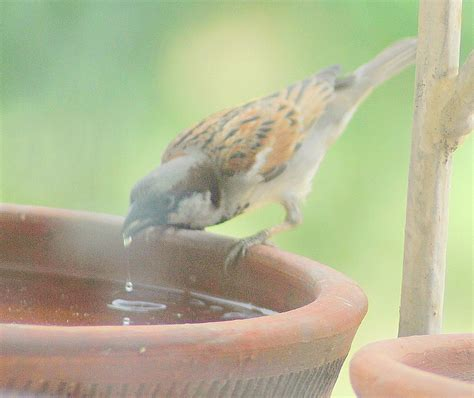 pledge water for birds and animals this summer the life