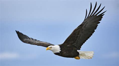 egg hatches in pa bald eagle nest nbc 10 philadelphia