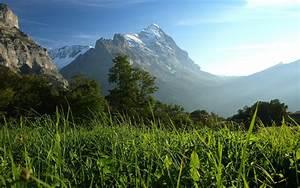 Wallpaper, Sunlight, Trees, Landscape, Mountains, Hill