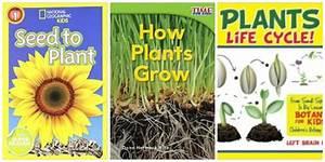 Botany Books For Kids