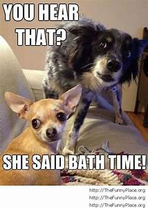 Bath time dog faces – TheFunnyPlace