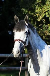 2 Chevaux Occasion : centre questre de ouistreham chevaux vendre ouistreham ~ Medecine-chirurgie-esthetiques.com Avis de Voitures