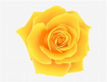 Yellow Rose Clip Roses Clipart Rosa Amarela