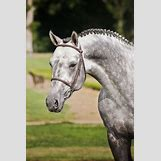 Dapple Grey Thoroughbred | 533 x 800 jpeg 65kB