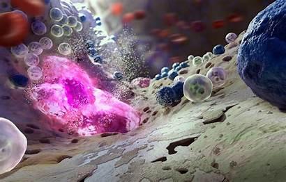 Biology Bacteria Science Microscope Marrow Bones Viruses