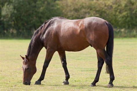 common diseases  ailments  horses  ponies petshomes