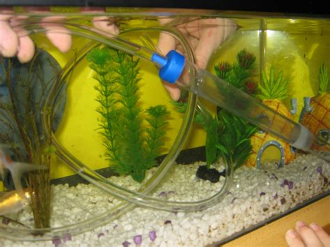 how to clean a fish tank fish tank cleaner fish cleaning and class photo 008 2017 fish tank maintenance