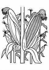 Coloring Verdura Frutta Plantation Kleurplaten Groente Fruit Disegni Pilgrims Indians Printable Disegno Bambini Thanksgiving Coloriage Vegetable Bodol Grip Vegetables sketch template