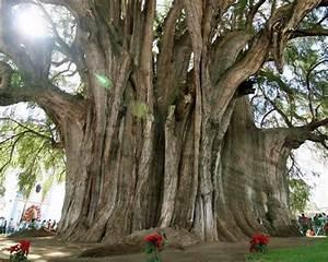 Gros C La Puissance : les 10 arbres les plus impressionnants au monde bio la une ~ Medecine-chirurgie-esthetiques.com Avis de Voitures