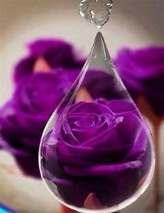 Purple Rose inside of a Raindrop | Purple | Pinterest ...