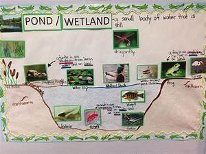 Pond Habitat Pictorial  Diagram  Input  This Concept By G L A D Introduces Tough Vocabulary For