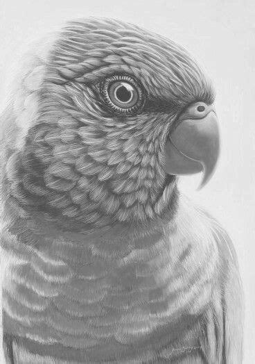 pin  kathryn thompson  vogels uilen enz colour pencil shading bird drawings black