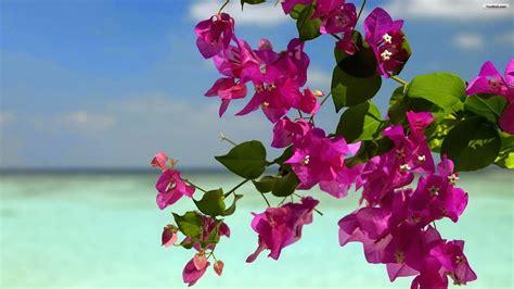 Summer Flowers Wallpaper  Beautiful Desktop Wallpapers 2014