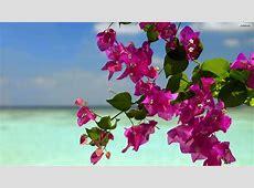 Summer Flowers Screensavers and Wallpaper WallpaperSafari