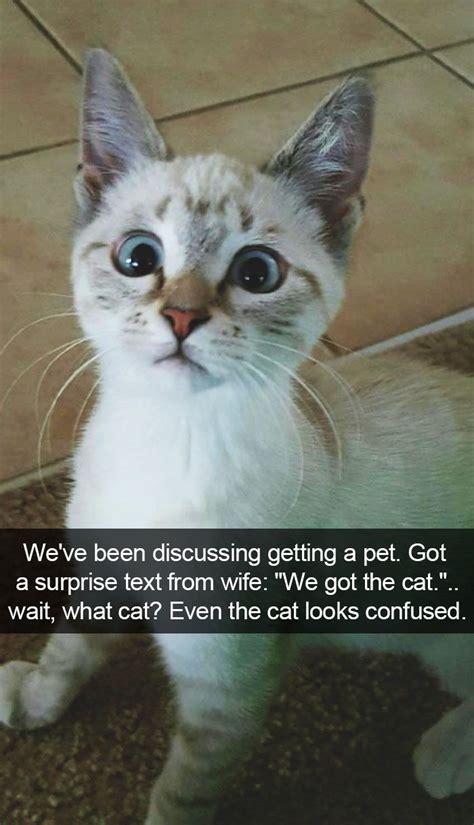 hilarious cat snapchats funny cat memes cat memes