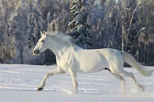 White Horses HD Wallpapers – Horses For Desktop | HD ...