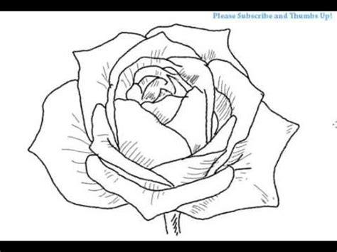 draw  open rose flower youtube