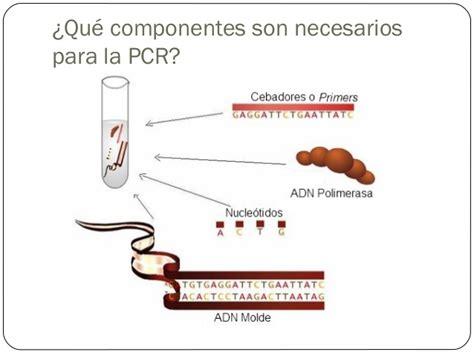 bureau de la pcr reacci 243 n en cadena de la polimerasa pcr