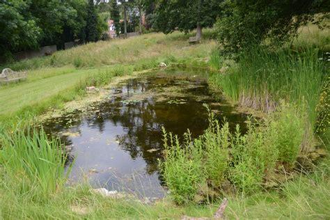 Turner Natural pond website (7) - Dixons Landscapes