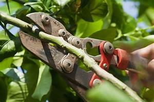 Wie Lagert Man Zitronen : zitronenbaum schneiden wann wie macht man das ~ Buech-reservation.com Haus und Dekorationen