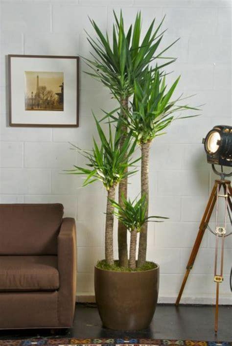 Große Pflanze Wohnzimmer by Deko Pflanzen Wohnzimmer