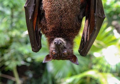 coronavirus close relative   bats  china china