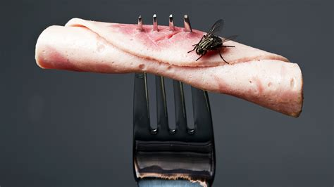 Should You Throw Away Food Once A Fly Has Landed On It