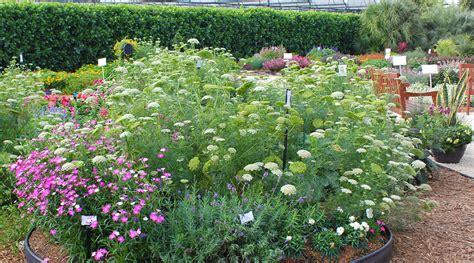 cut flower garden design perennial flowers for the cut flower garden higgledy garden julie moir messervy design studio