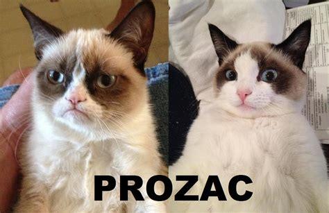 prozac for cats prozac grumpy cat your meme