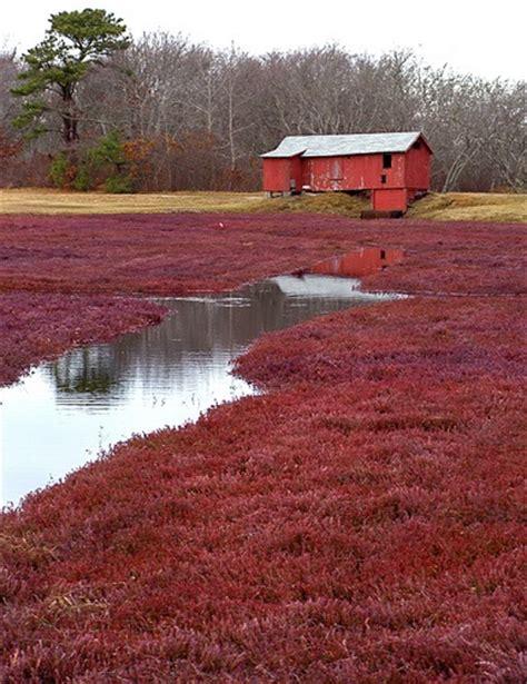 Vermont Cranberry Bog  Life On The Cranberry Farm