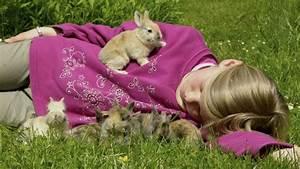 Haustiere Für Kinder : kaninchen sind ideale haustiere f r kinder ~ Orissabook.com Haus und Dekorationen