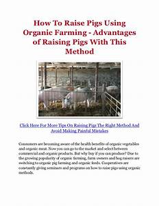 How To Raise Pigs Using Organic Farming - Advantages of ...