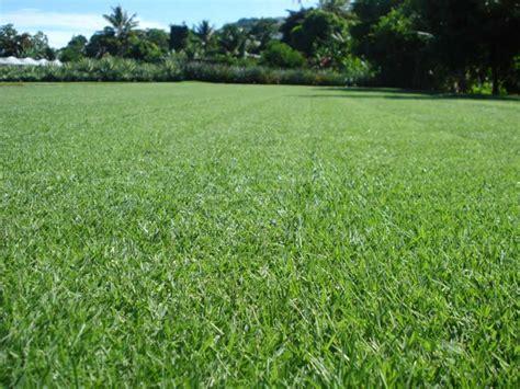 Innovation Zoysia™ A Versatile Zoysia Grass