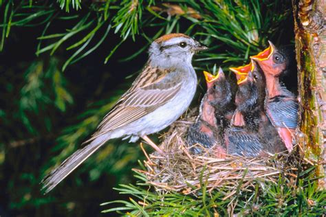 contractor hold   removing nests