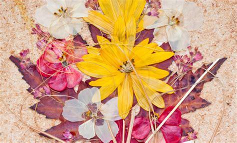 quadri  fiori pressati idea regalo  natale fai da te