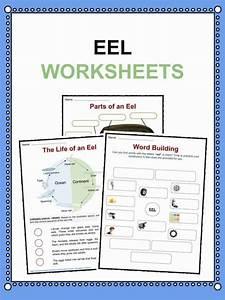 Eel Facts  Worksheets  U0026 Information For Kids