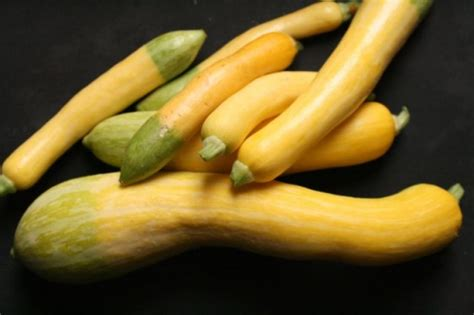 how to cook yellow squash how to cook squash how to cook fantastic food