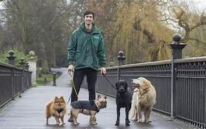 A dog walker could benefit your pets health for Puppy dog walker