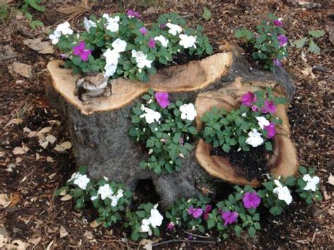 ag es de cuisine jardin exotique un tronc d 39 arbre devient un élément